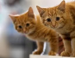orange cat names popular kitten names 2012 s trendiest cat monikers huffpost