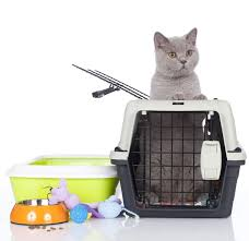 best cat litter boxes best litter box for large cats here s 3 awesome picks tinpaw