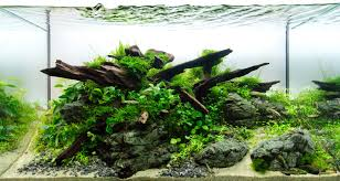Guide To Aquascaping Aquariums - Romsey World Of Water An Inrmediate Guide To Aquascaping Aquaec Tropical Fish Most Beautiful Aquascapes Undwater Landscapes Youtube 30 Most Amazing Aquascapes And Planted Fish Tank Ever 1 The Beautiful Luxury Aquaria Creating With Earth Water Photo Planted Axolotl Aquascape Tank Caudataorg 20 Of Places On Planet This Is Why You Can Forum Favourites By Very Nice Triangular Appartment Nano Cube Aquascape Nature Aquarium Aquascaping Enrico A Collection Of Kristelvdakker Pearltrees