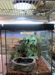 Basking Lamp For Chameleon by Review Of Reptile Heat Bulbs