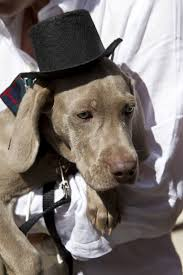 Tompkins Square Park Halloween Dog Parade Winner by 22 Best Fancy Dress Pet Parade Images On Pinterest Animals Pet