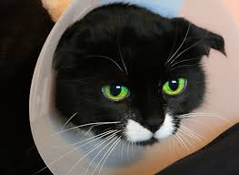 cat wont eat 5 injured 7 reasons your cat won t eat lifestyle