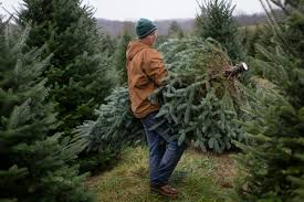 Pet Friendly Christmas Tree Preservative Recipe by Christmas Tree Farms In Ohio Christmas Lights Decoration
