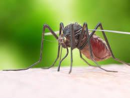 mückenstecker gesundheitlich und ökologisch bedenklich