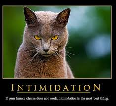 Animal 21 Funny Cat Motivational Posters