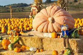 Pumpkin Farms In Georgia by Halloween And Fall Activities In Cherokee County U0026 North Georgia