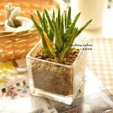fashion home hydroponics bottle decoration flower pot aloe vera