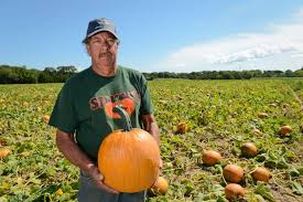 Pumpkin Picking Riverhead by Stakey U0027s Farm Newsday