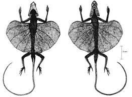 Are there any animals that have four legs and wings