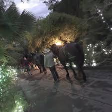 Boy Scout Christmas Tree Recycling San Diego by San Diego Botanic Garden 1107 Photos U0026 302 Reviews Botanical