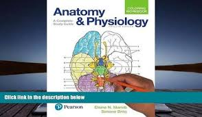 PDF Anatomy And Physiology Coloring Workbook A Complete Study Guide 12th Edition Elaine N