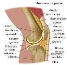 vous avez mal au genou les causes et les remèdes améliore ta santé