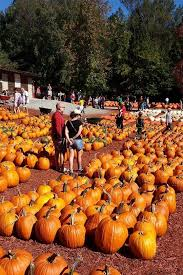 Burts Pumpkin Farm 2015 by These Are The Best Pumpkin Patches In Every Southern State