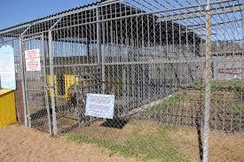100 Tiger Truck Stop Louisiana PuppyProtector1 Free Tony The