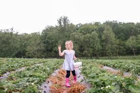 Pumpkin Patch Frederick County Md by Farm Capitol Momma