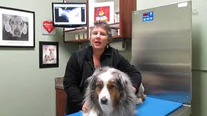 Welcome To Friendship Pet Hospital And Wellness Center - YouTube Jetty A34165769 Homes For Pets Chachi A35249411 Barn Petsbarnstore Twitter Kitten Marley A36143713 Petbarn Australia Youtube Little Red San Antonio Menu Prices Restaurant Reviews Custom Made Barn Door Rolling Baby Gates House Stuff Otto A385218