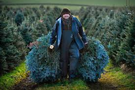 1101 Christmas Tree Prices This Years Crop Of Trees