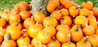 Best Pumpkin Patch Lancaster Pa by Pumpkin Patches Aplenty In Middle Tennessee Things To Do