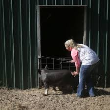 Backyard Pig Pen Plans