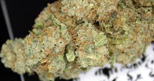 6 x Northern Lights Cannabis Strain – Feminized Autoflower seeds