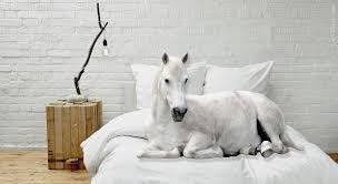 schimmel im schlafzimmer vorbeugen statt renovieren bett1 de