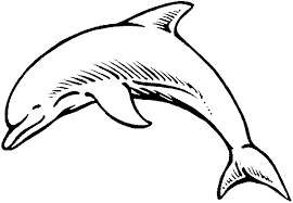 Dolphin Coloring Pages Printable Home Critters Cartoons