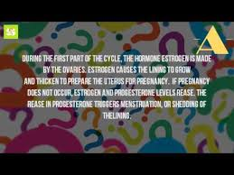 Shedding Of Uterine Lining During Pregnancy by What Causes The Lining Of The Uterus To Thicken Youtube