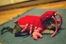costume for cat crab costume for cat pinx pets