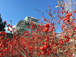 Winterberry Christmas Tree by Take Five The U S Botanic Garden Architect Of The Capitol