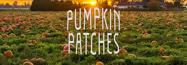 Free Pumpkin Patch Charleston Sc by Pumpkin Patches And Farms Near Hardeeville Sc
