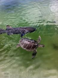 Is Bathtub Beach In Stuart Fl Open by Florida Oceanographic Coastal Center Stuart All You Need To