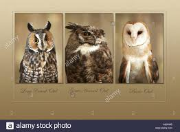 Long-eared Owl Great Horned Owl Barn Owl Stock Photo, Royalty Free ... Barn Owl Facts About Owls The Rspb Bto Bird Ring Demog Blog October 2014 Chouette Effraie Lechuza Bonita Sbastien Peguillou Owl Free Image Peakpx Wikipedia Barn One Wallpaper Online Galapagos Quasarex Expeditions Hungry Project Home Facebook Free Images Nature White Night Animal Wildlife Wild Hearing Phomenal Of Nocturnal Wildlife Animal Images Imaiges