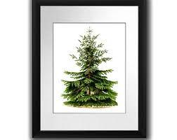 Nordmann Fir Christmas Tree Seedlings by Fir Tree Print Etsy