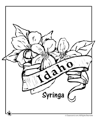 State Flower Coloring Pages Idaho Page Classroom Jr