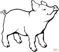 Free Download Coloring Picture Of A Pig 25 In For Kids With
