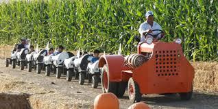 Pumpkin Patch Fresno Ca Hours by Corn Maze U0026 Pumpkin Patch Patterson Ca Haunted Corn Maze