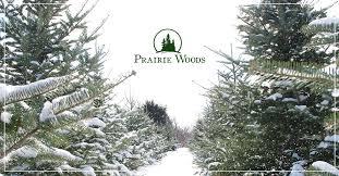 Christmas Tree Farm Lincoln Nebraska by Prairie Woods Tree Farm Christmas Grows Here