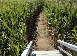 Petaluma Pumpkin Patch Corn Maze Map by On Halloween And Corn Mazes U2013 Bright Lights Of America