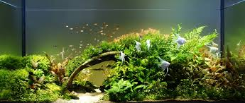 AquaGalaxy Pro Contest 2013 | AquaScaping World Forum Hamsa Wabikusa Style Aquascaping World Forum Httpwww Nature Aquarium And Aquascaping Wiki 25l Nano Capa 2011 French Aquascapers Results My Scape Iaplc Rank 70 The Passing Of Legend Takashi Amano Magazine With Nicolas Guillermin Surreal Submarine Amuse Aquascape The Month August 2010 Beyond Riccardia Chamedryfolia Question This Is Ada 2009 Susanna Aquascape Garden Bonsai Plants