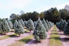 Wadsworth Ohio Christmas Tree Farm by Christmas Tree Farm Alabama Fresh Cut Christmas Wreaths Beavers