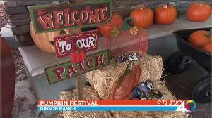 Best Pumpkin Patch Near Roseville Ca by Gibson Ranch Pumpkin Festival Fox40