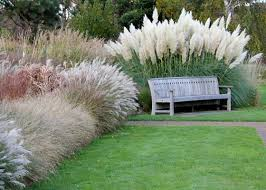 Plant Grasses Now for a Dramatic Garden