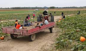 100 Pickem Up Truck Store A Good Pumpkin May Be Hard To Find By Mid October Business