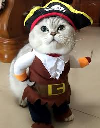 costume for cat pirate cat costume turn your cat into a pirate with this cat costume
