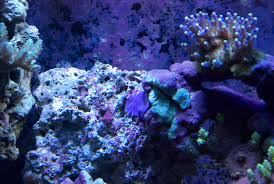 Why I Involuntarily Re-did My Aquascaping – Mr. Saltwater Tank Is This Aquascape Ok Aquarium Advice Forum Community Reefcleaners Rock Aquascaping Contest Live Rocks In Your Saltwater Post Your Modern Aquascape Reef Central Online There A Science To Live Rock Sanctuary 90 Gallon Build Update 9 Youtube Page 3 The Tank Show Skills 16 How Care What Makes Great Large Custom Living Coral Aquariums Nyc