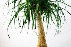 welche pflanzen und palmen eignen sich für schlafzimmer
