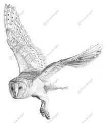 flying barn owl tattoo Google Search Tattoos Pinterest