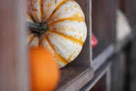 Auburn Pumpkin Patch by Pumpkin Patch U2014 Mosby Farms