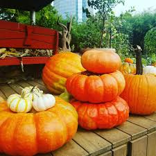 Oklahoma Pumpkin Patches by Oklahoma City Family Events Calendar Okc Kids Activities