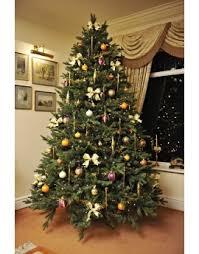 The 12ft Woodland Pine Tree